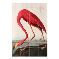 IXXI flamingo audubon wall art (multiple sizes)