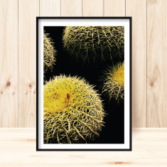 Golden barrel cactus art print (various sizes)