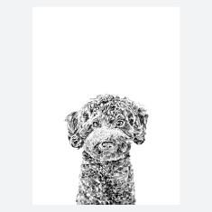 Miniature Poodle Print