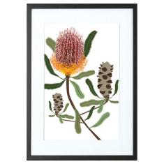 Firewood Banksia print