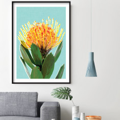 Pincushion protea art print (various sizes)