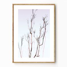 Branching Out photographic wall art print