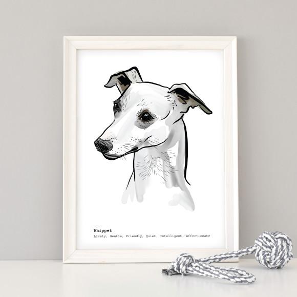 A3 Whippet art print