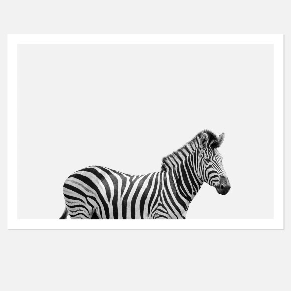 Hector Rose Zebra Limited Edition Fine Art Wall Print
