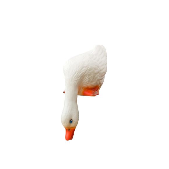 Looking Down Duck