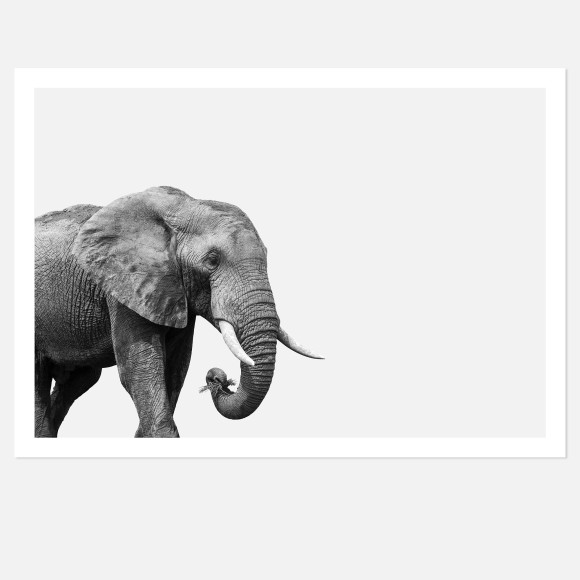 Hector Rose Elephant Limited Edition Fine Art Wall Print