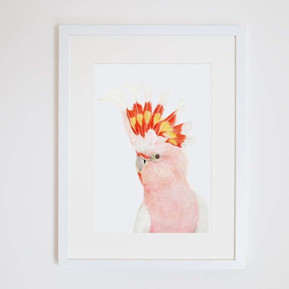 Major Mitchell Cockatoo Art Print