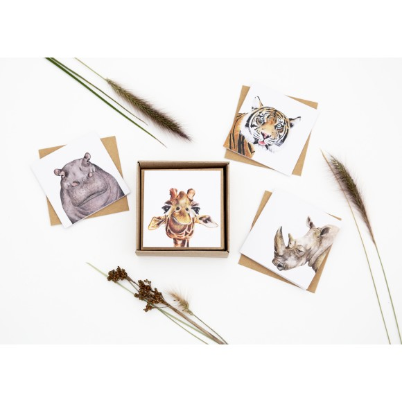 Safari Greeting Card Box Set