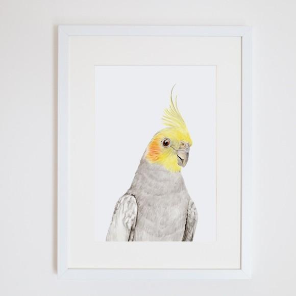Cockatiel Art Print