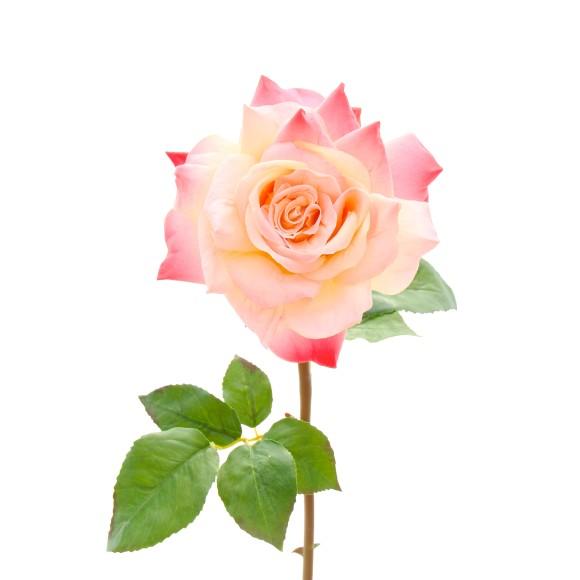 pink single stem