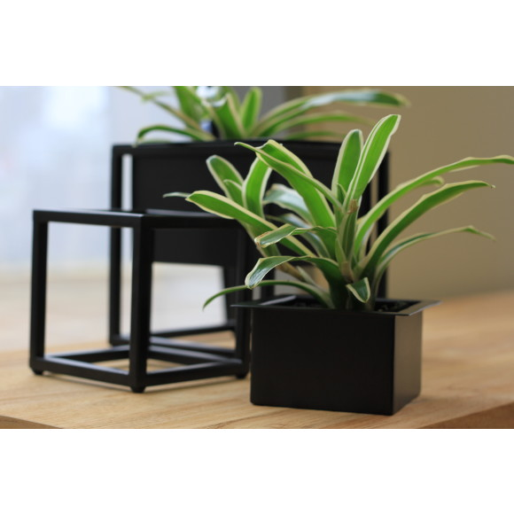 Black with plant and box seperate