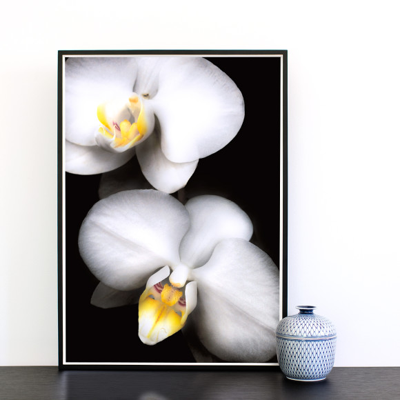 Grace White Orchid Limited Edition Art Print