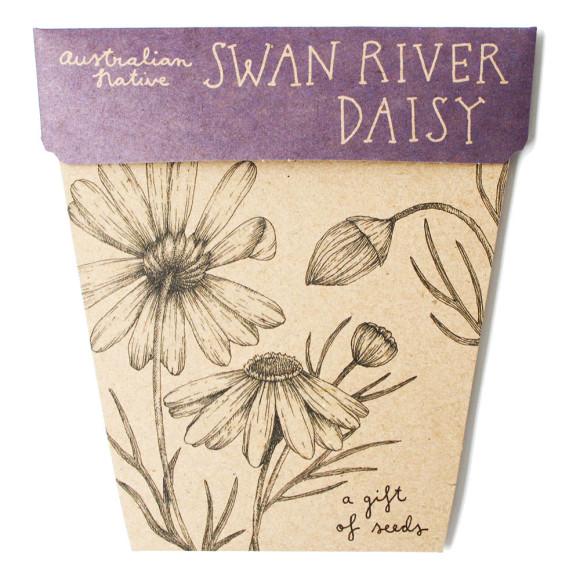Swan River Daisy