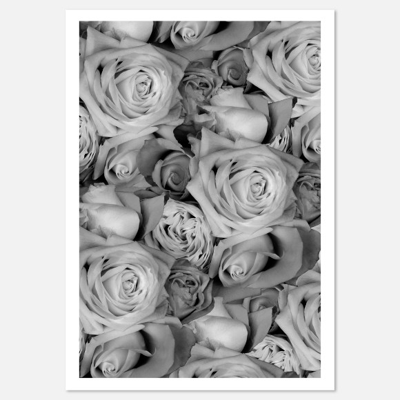 Hector Rose Roses Limited Edition Fine Art Print