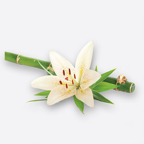 BAMBOO & WHITE LILY