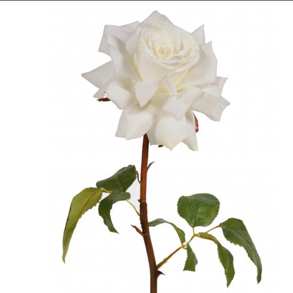 white single stem