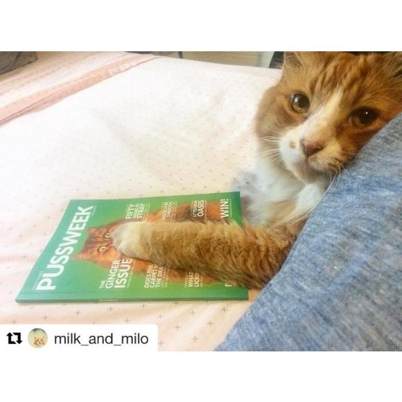 10/10 Gingers agree Pussweek is essential litterbox reading