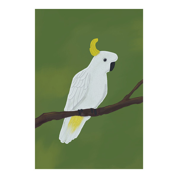 f5640a15356c Sulphur-crested Cockatoo Illustration Print | hardtofind.