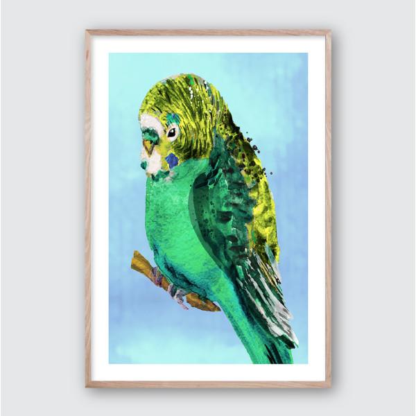 Green Budgie No 2 Framed Giclee Art Print