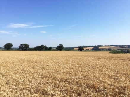 A ring fenced parcel of Grade III agricultural land on the outskirts of Rye with workable sized field parcels, far reaching views and access directly from the Public Highway. The land is currently farmed under an arable rotation and vacant possession...