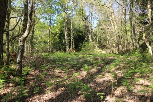 A single block of mixed broadleaf and coniferous woodland situated within the High Weald Area of Outstanding Natural Beauty. In all about 6.04 acres.