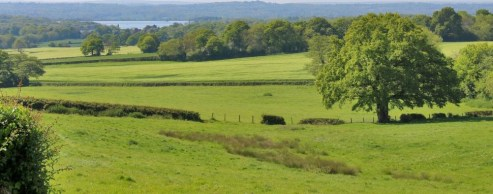 A rare opportunity to purchase a ring fenced pasture and arable farm with a detached bungalow, extensive range of livestock buildings, and approximately 118.33 acres of land in a peaceful rural location, which could give rise to viticulture opportuni...
