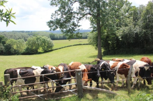 A ring-fenced parcel of agricultural land.Enclosed pasture fields, woodland and a pole barn.In all about 35 acres.