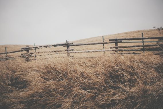 Photo of grasslands with a fence