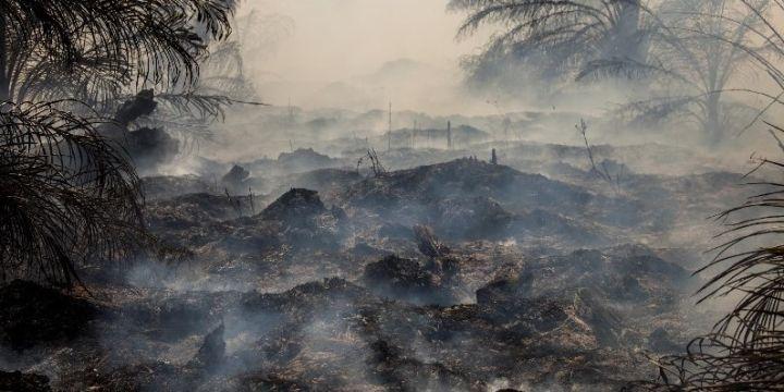 Tinggi Muka Air di Gambut Harus Dijaga untuk Cegah Kebakaran