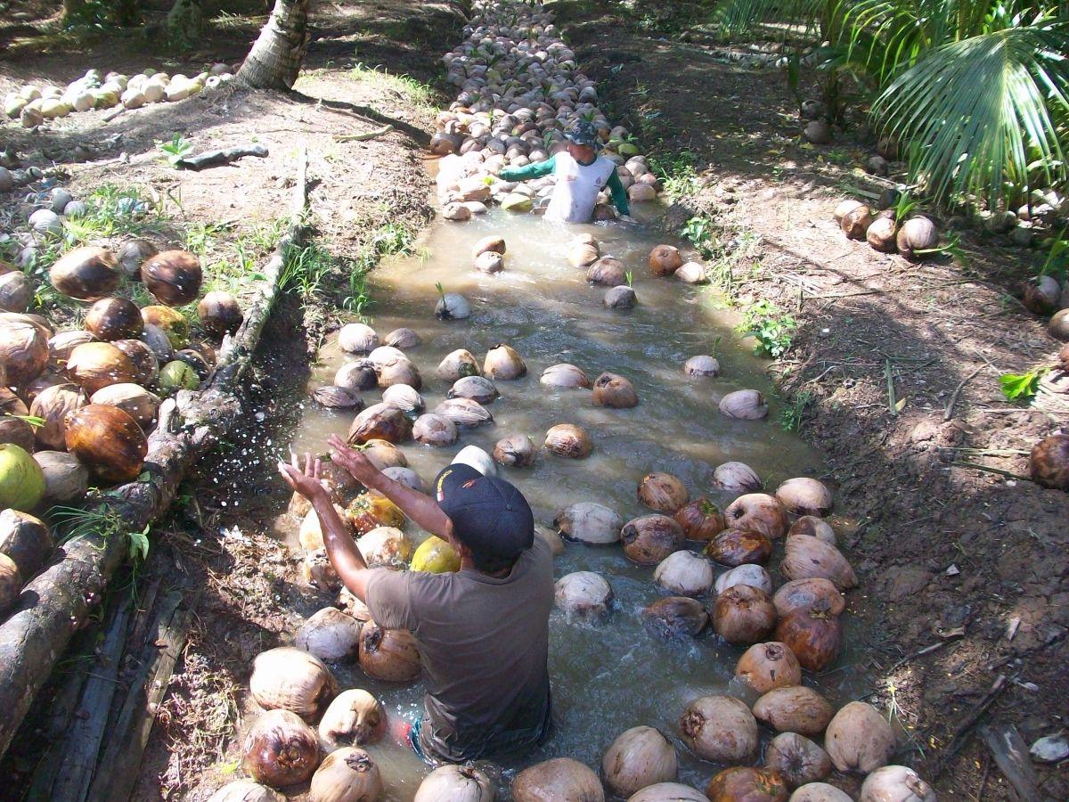 BRG Dorong Peningkatan Kapasitas Petani di Desa Gambut