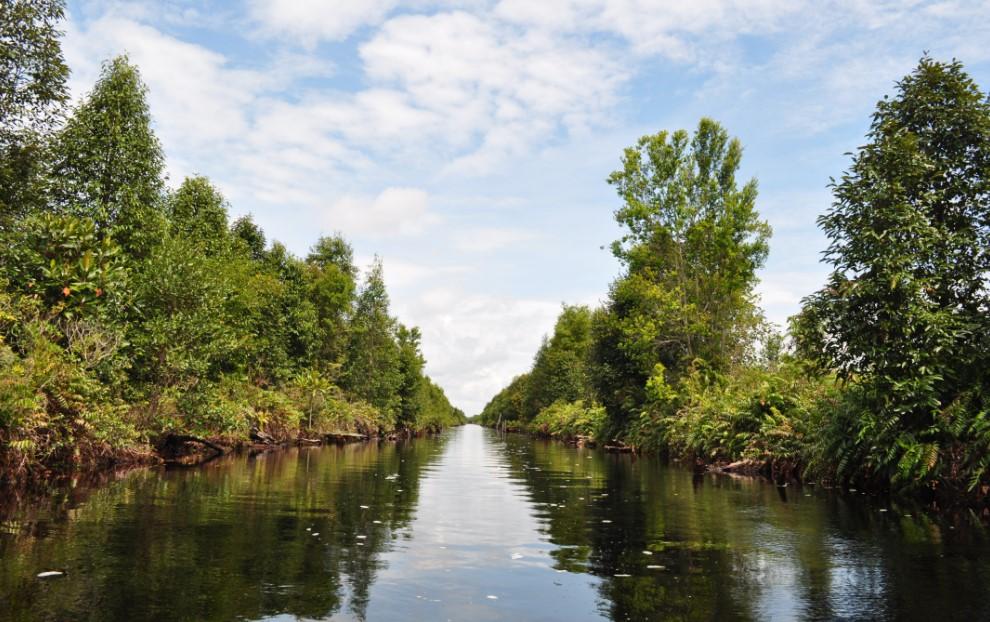 Mengulas Kembali Perlindungan Gambut di Hari Air Sedunia