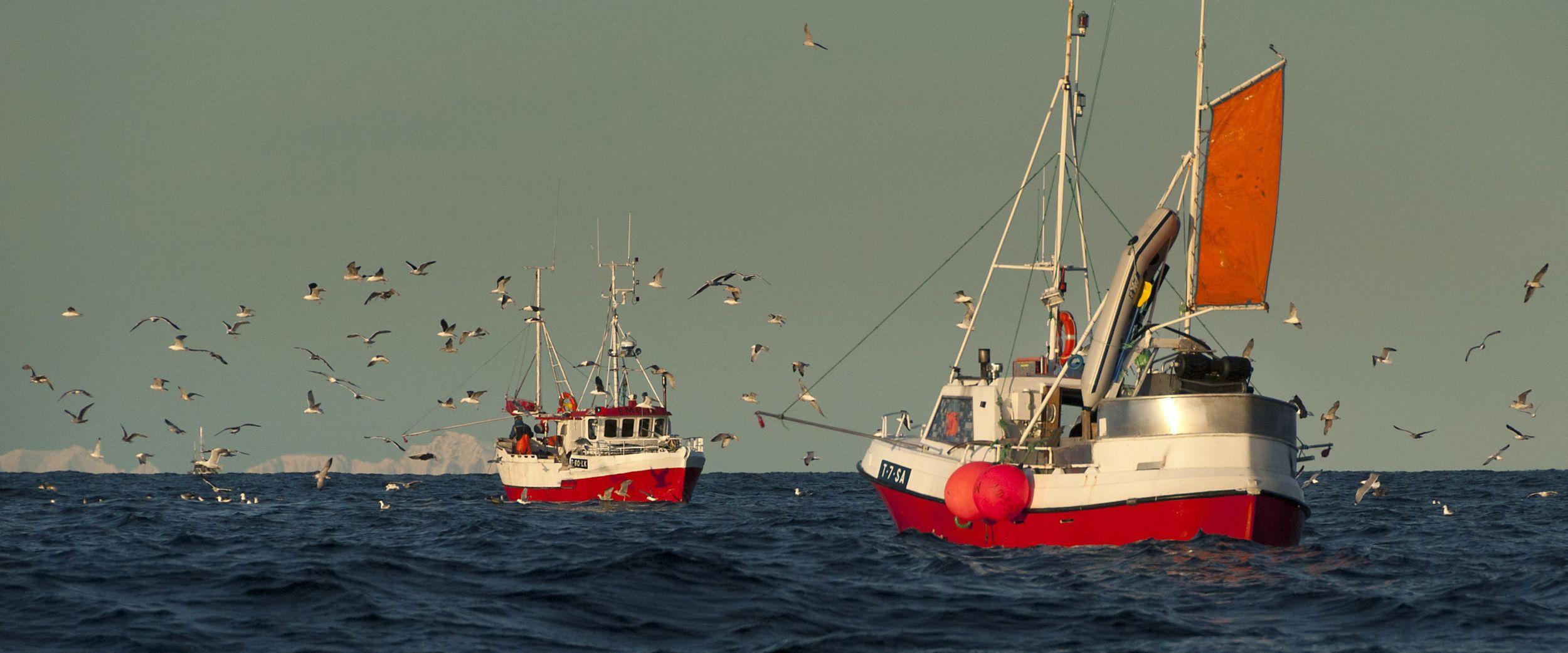 Fishery in Lofoten, Photo: Reiner Schaufler, nordnorge.com