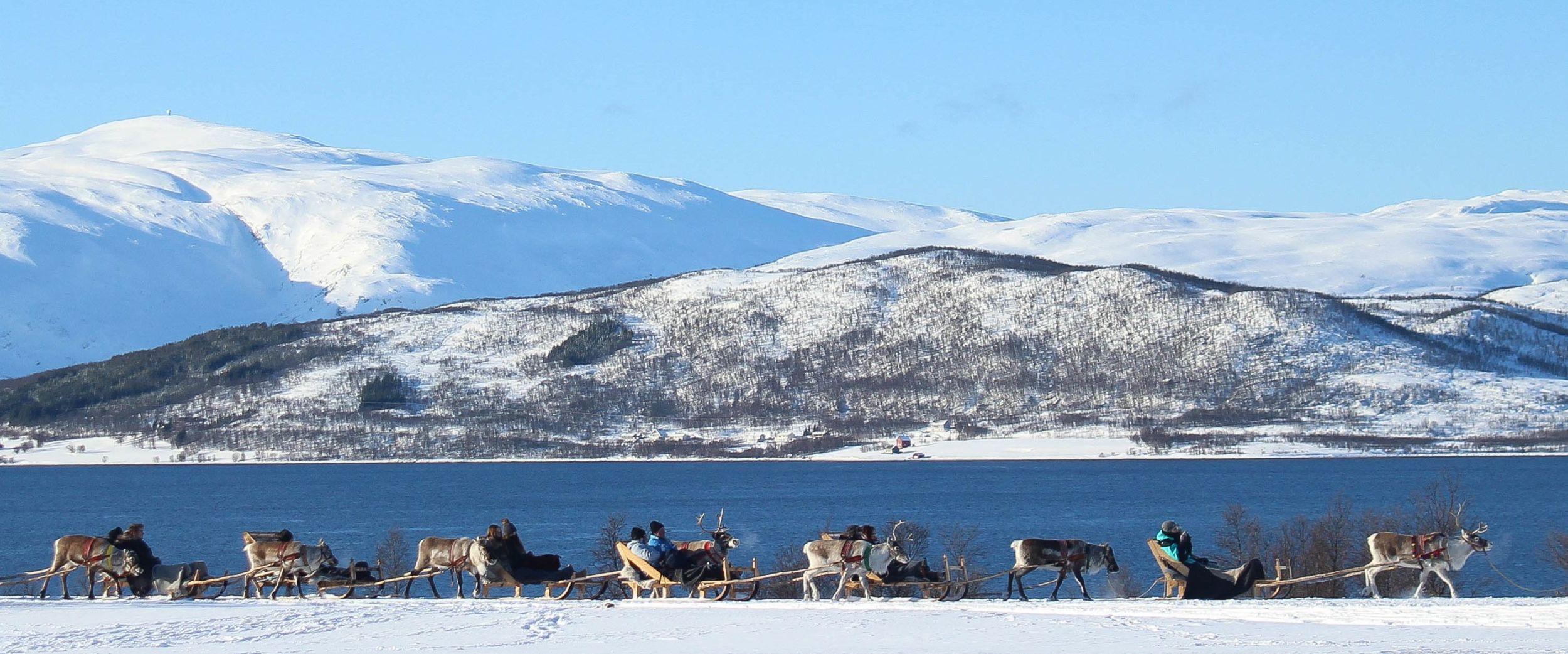 Sledetur med reinsdyr, vinter