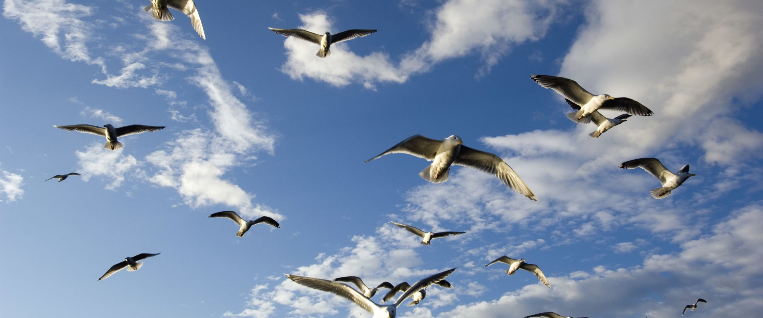 Seagulls in Finnmark. Photo Johan Wildhagen/visitnorway.com