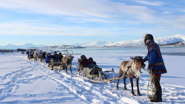 Reindeer sledging in Tromsø.