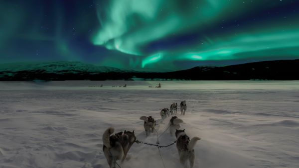Dog sledding in the Northern lights