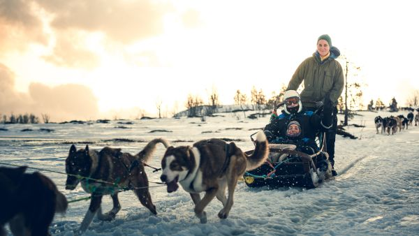 Dog sledding at Kvaløya outside Tromsø in the winter.