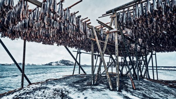 Rows of fish hanging out to dry by the ocean in the winter.