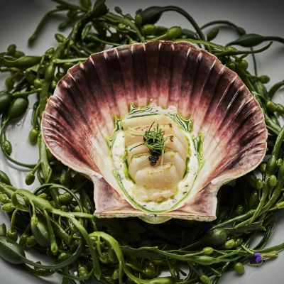 Scallops served in own shell from Hildring Fine Dining, photo by Tom Haga