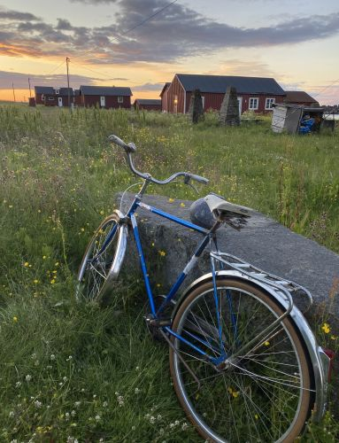 Bike in a field of summer flowers in Lofoten