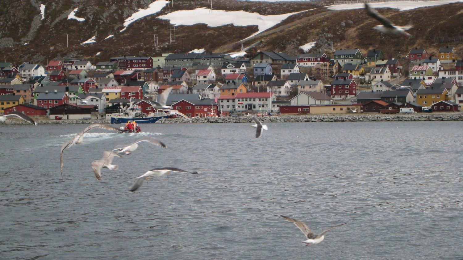 Kjøllefjord with seagulls. Photo: Nina Smedseng, nordnorge.com