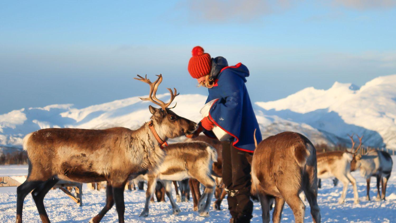 Feeding reindeer at excursion outside Tromsø.