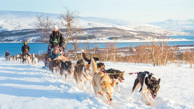 Tromsø, hundekøyring ein solfylt vinterdag
