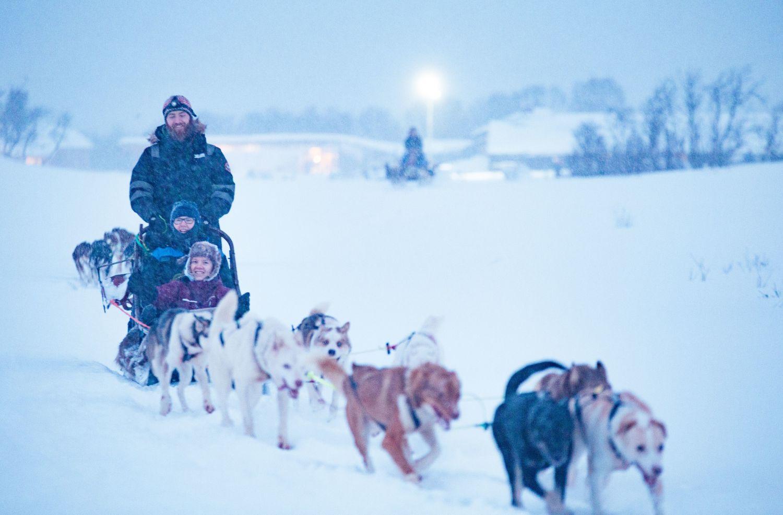 Hundekøyring utanfor Tromsø i snø og vinter