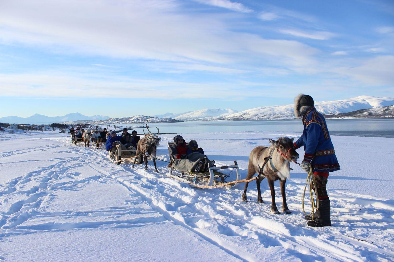 Sledekøyring med reinsdyr, vinter, utanfor Tromsø