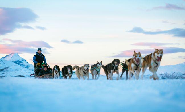 Hundekøyring Tromsø Vinter