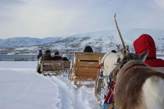 Sledetur med reinsdyr utanfor Tromsø
