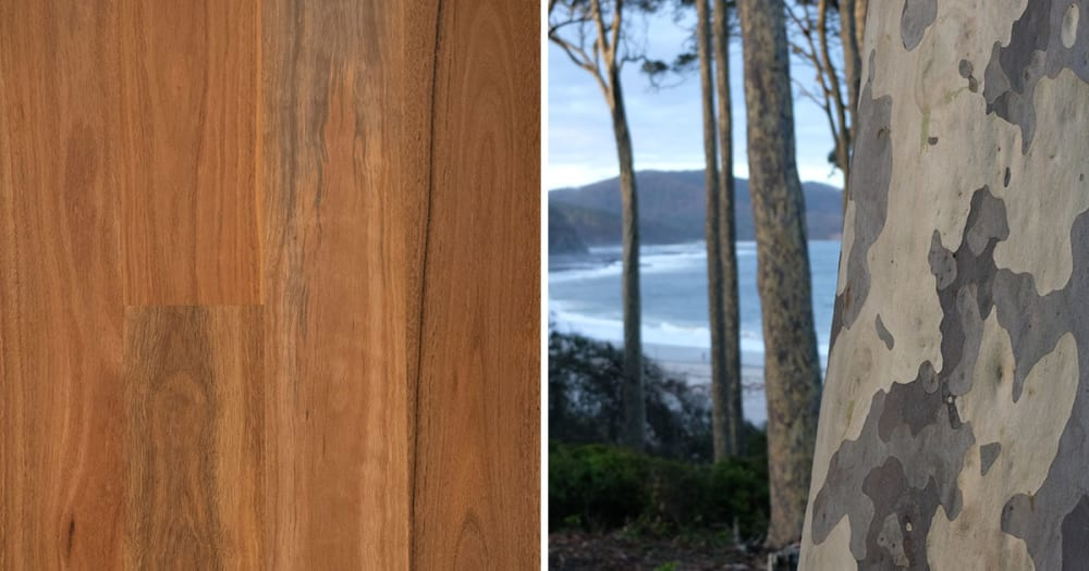 Havwoods EP112 Spotted Gum Engineered Timber Flooring