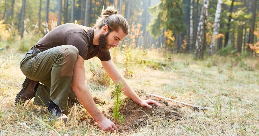 News | AU | Sustainability 07 Responsible Forestry LI