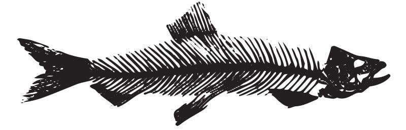 Herring Fish inspired the Herringbone Pattern